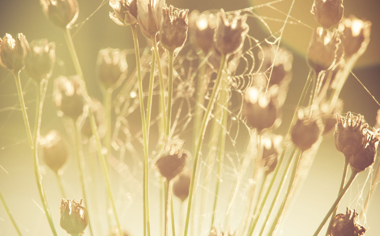 Beautiful Light Beauty In Nature Close-up Day End Of The Day Fields Of Gold Flowers Golden Hour Grass Grasslands Growth Meadow Meadow Flowers Nature No People Outdoors Plant Serenity Soft Sunset Tranquility Cobweb Horizontal Indian Summer Warm Light