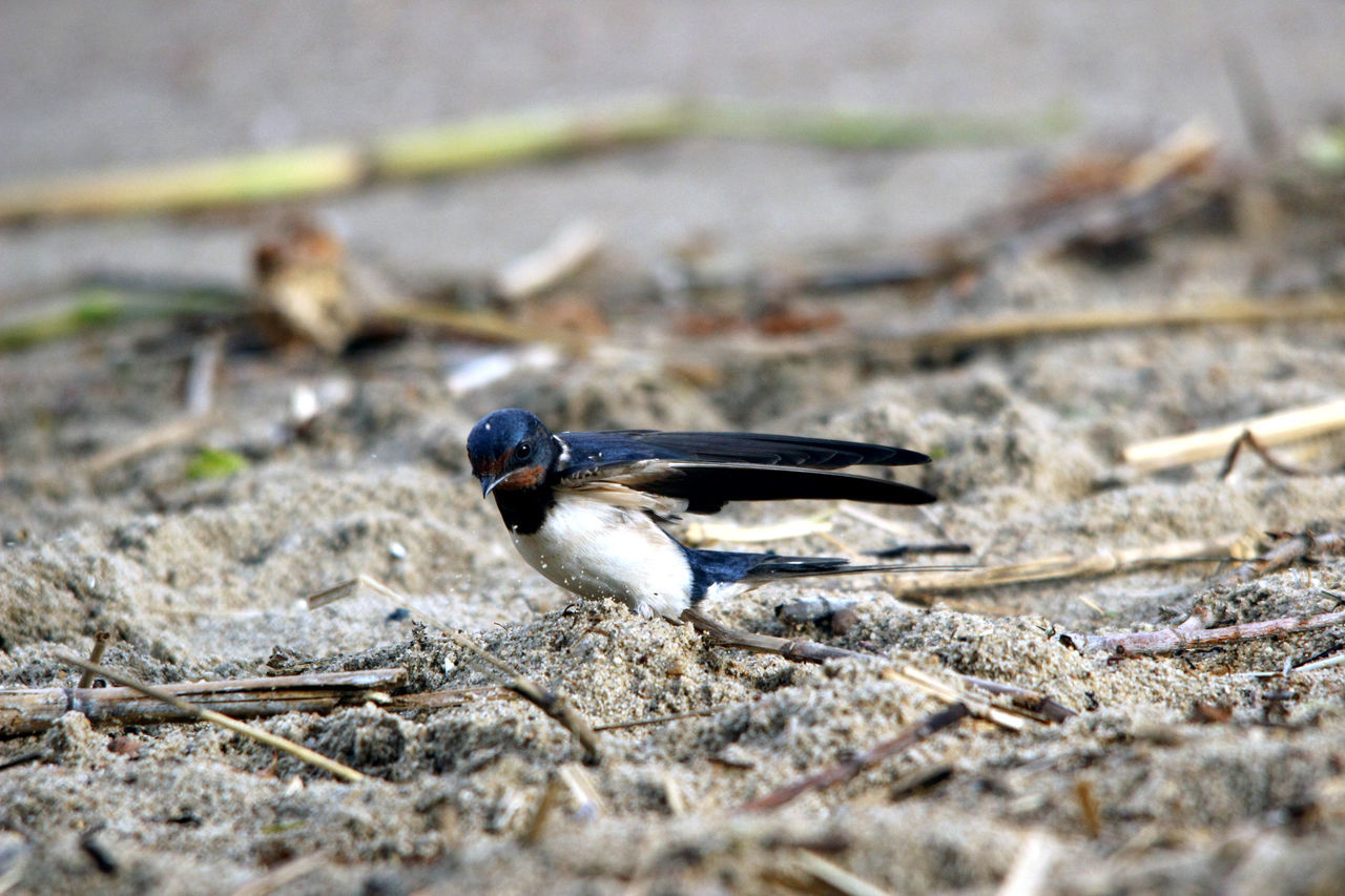 animals in the wild, animal themes, one animal, insect, day, animal wildlife, no people, outdoors, close-up, nature, bird