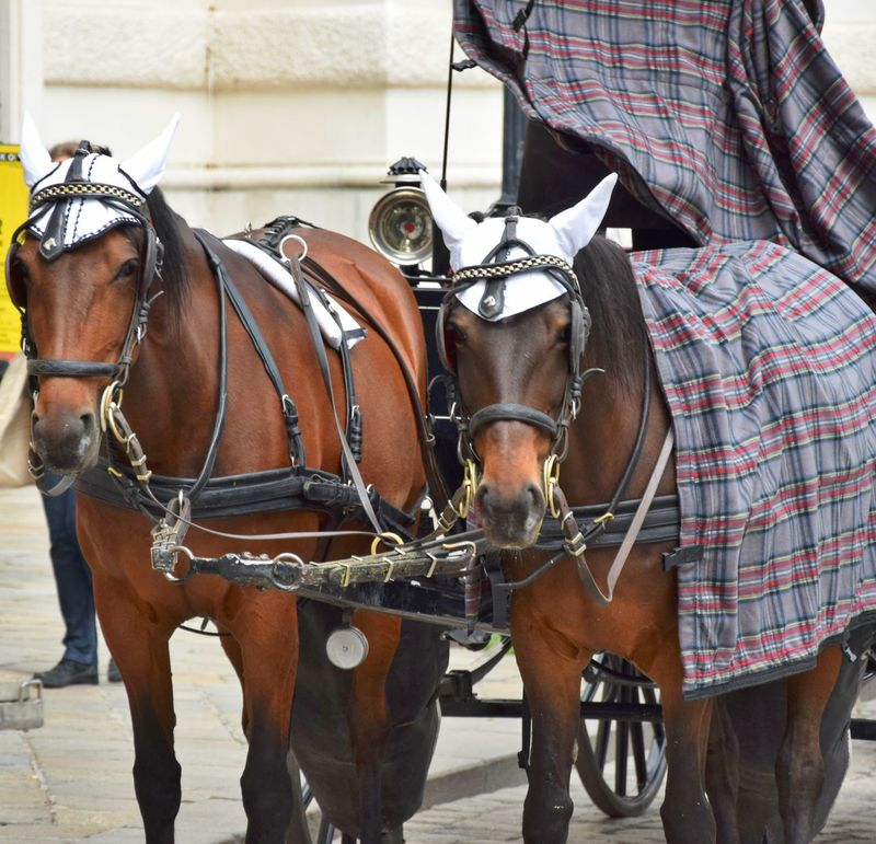 Animal Themes Brown Day Domestic Animals Horse Horsecloth Mammal Mode Of Transport No People Outdoors Trappings Two Horses