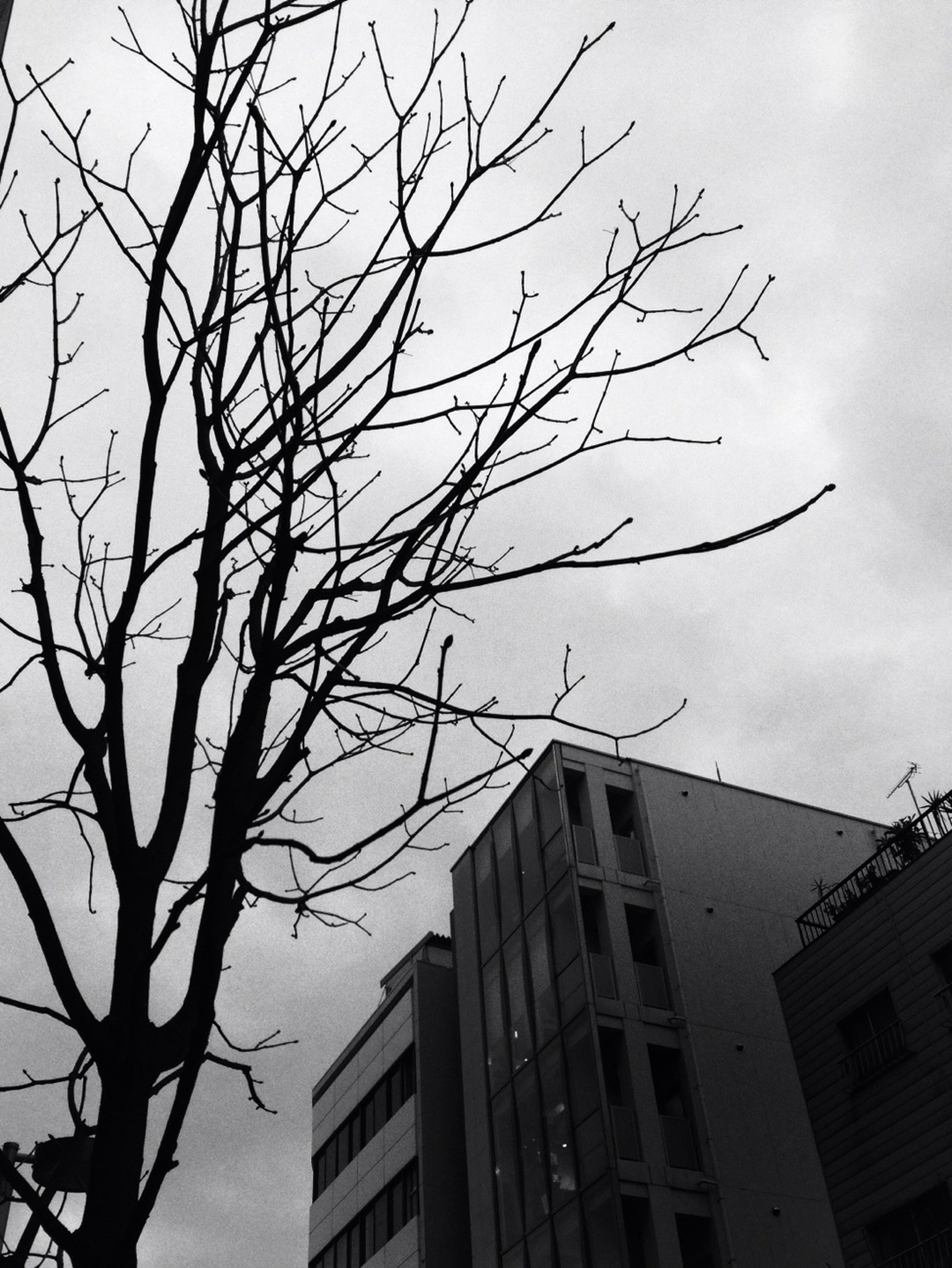 bare tree, building exterior, architecture, built structure, low angle view, branch, tree, sky, city, residential building, building, residential structure, day, outdoors, house, no people, nature, high section, window, clear sky