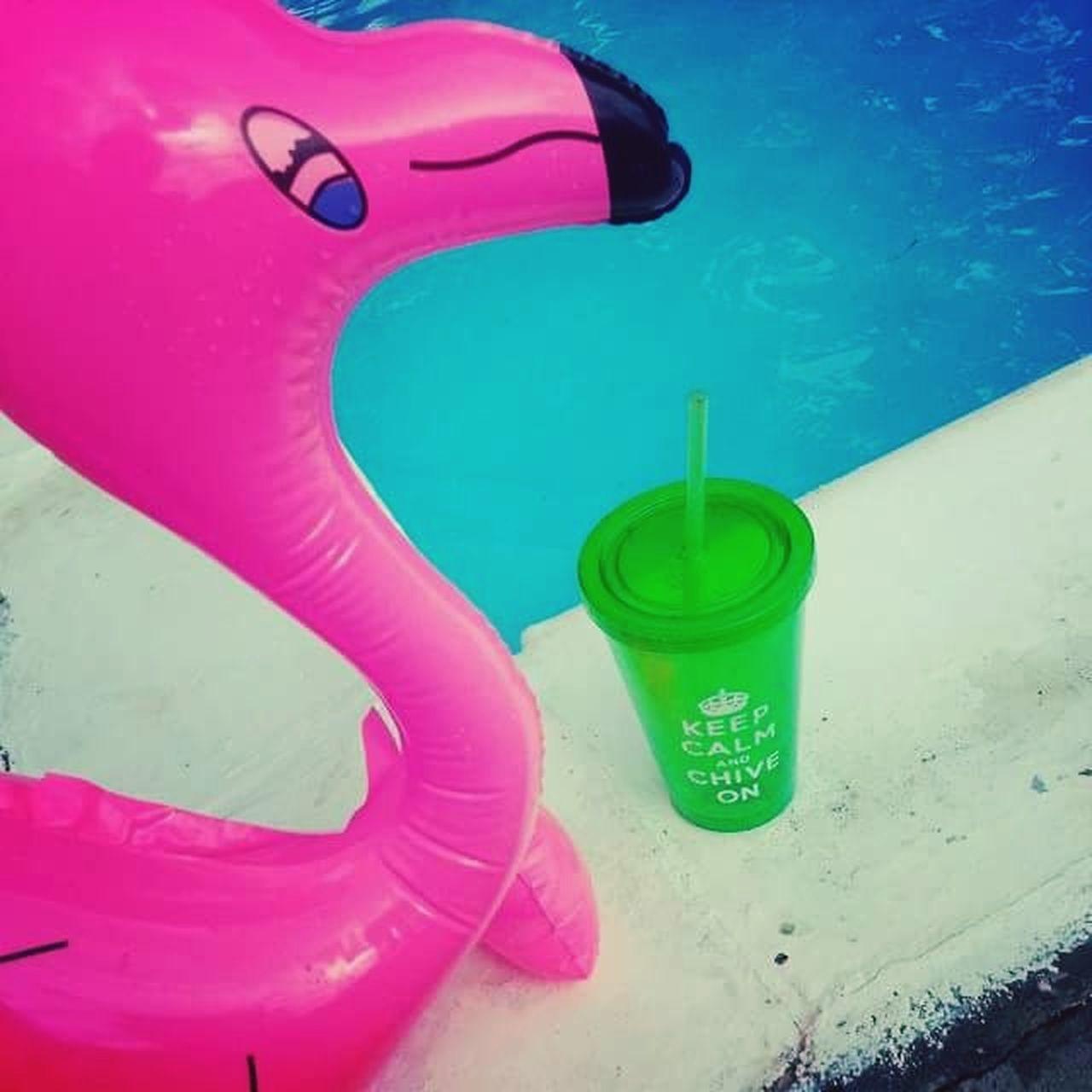 Poolside Flamingos Inflatables Chive Saltwaterpool Memphis, TN EyeEmNewHere