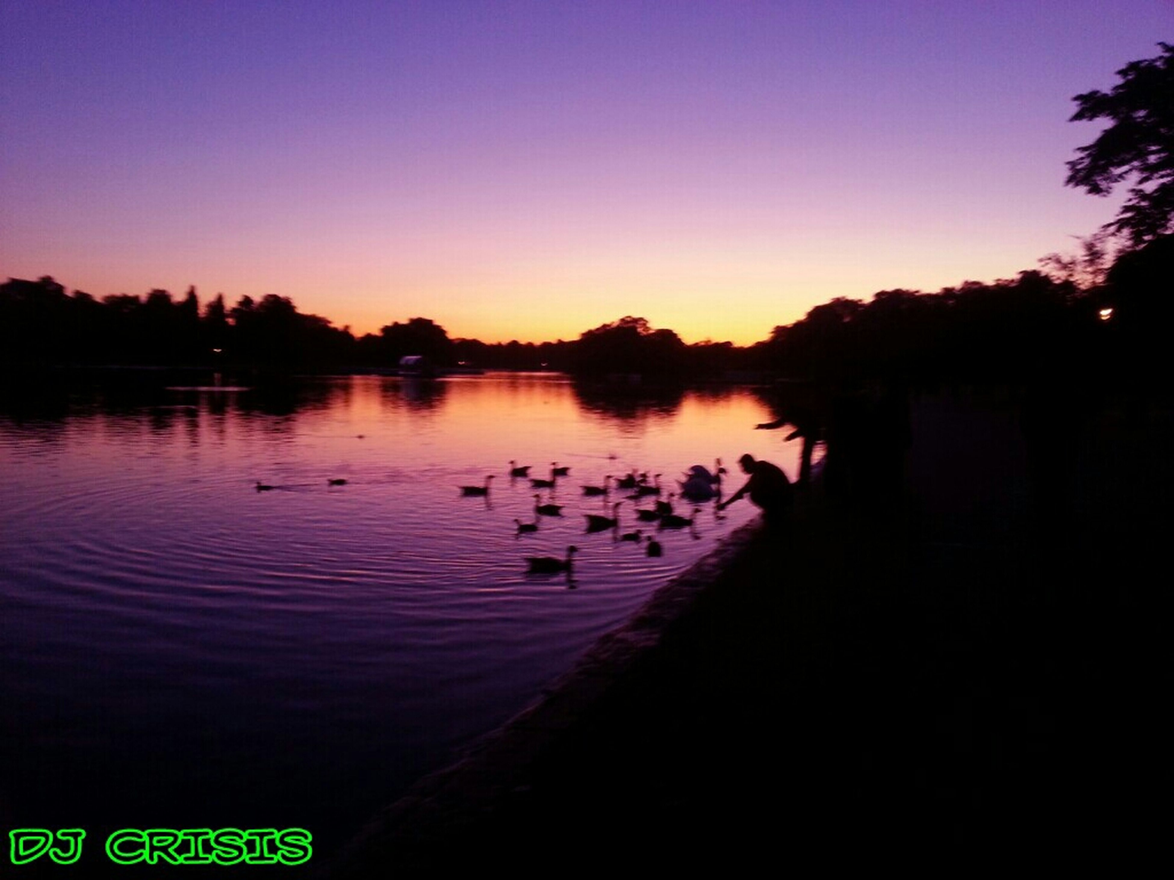 animal themes, bird, water, animals in the wild, wildlife, sunset, lake, clear sky, reflection, silhouette, tranquil scene, nature, beauty in nature, tranquility, scenics, copy space, tree, duck, river