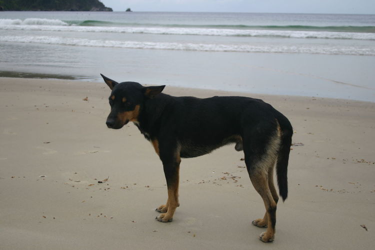 Trinidad And Tobago Canonphotography Beach Dog Lonely Dog Dog
