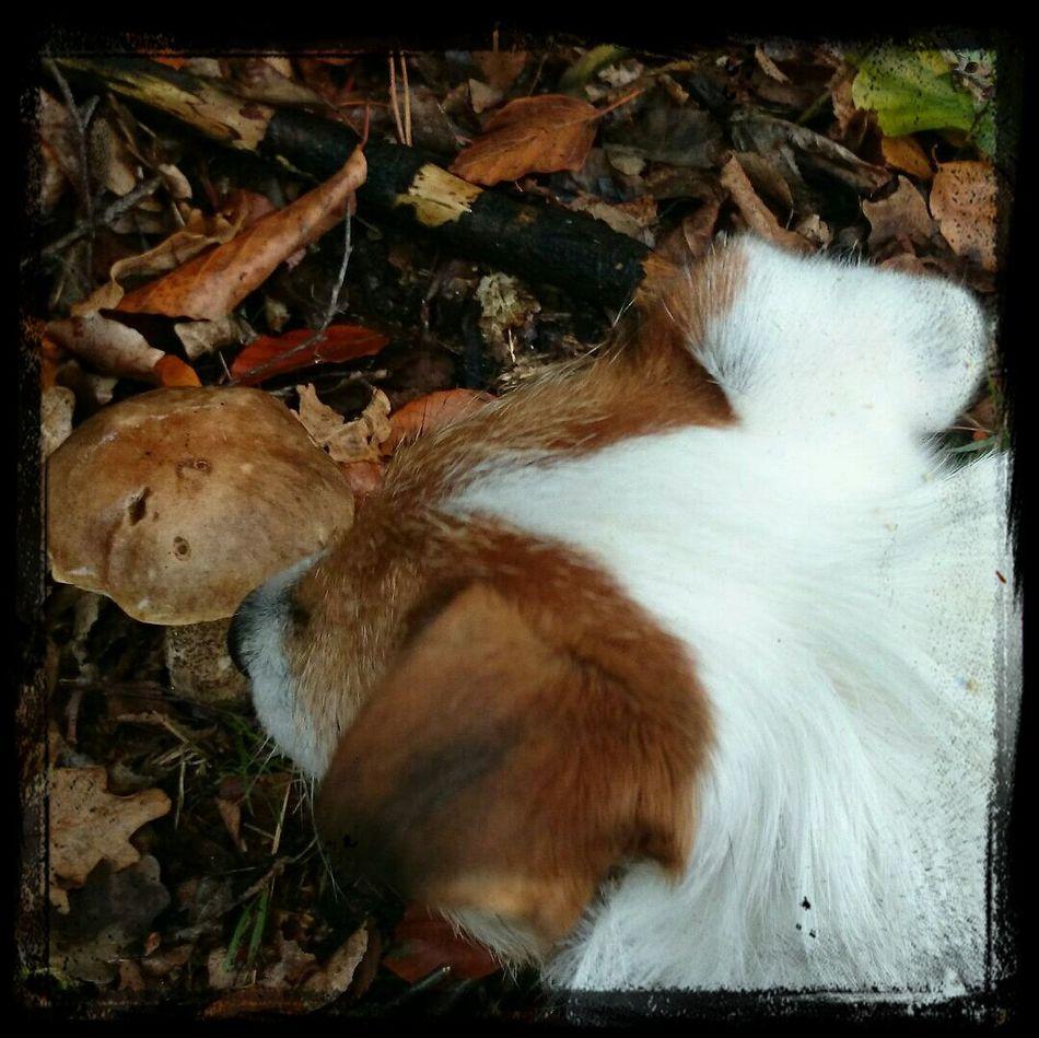 Yep. It's autumn....!!! Love this season... Autumn Dog Taking Photos Dead Car Battery