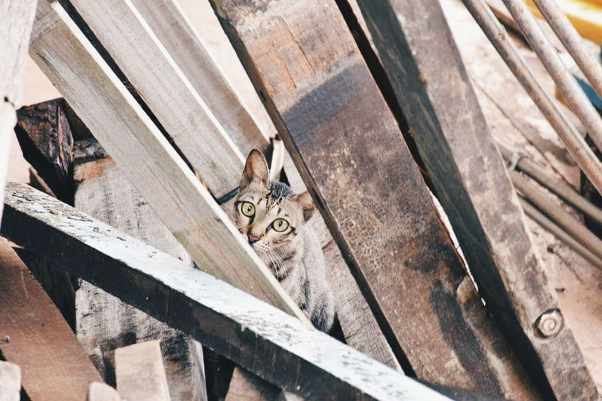 Hide and seek__ Animal Better Look Twice Cat Woods Hideandseek Malaysia