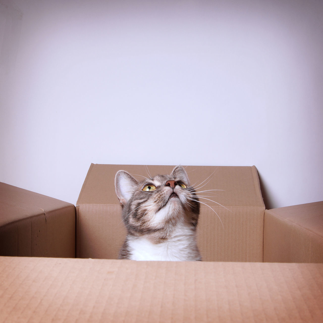 Beautiful stock photos of funny animal, Animal Themes, Box - Container, Cardboard Box, Cat