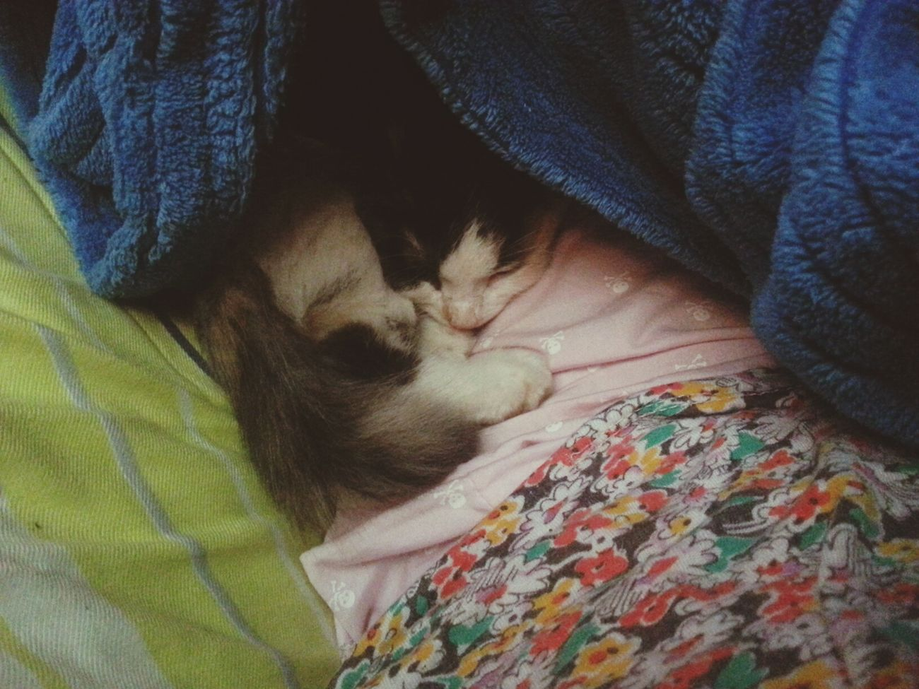 Cat Slepping Cuddle