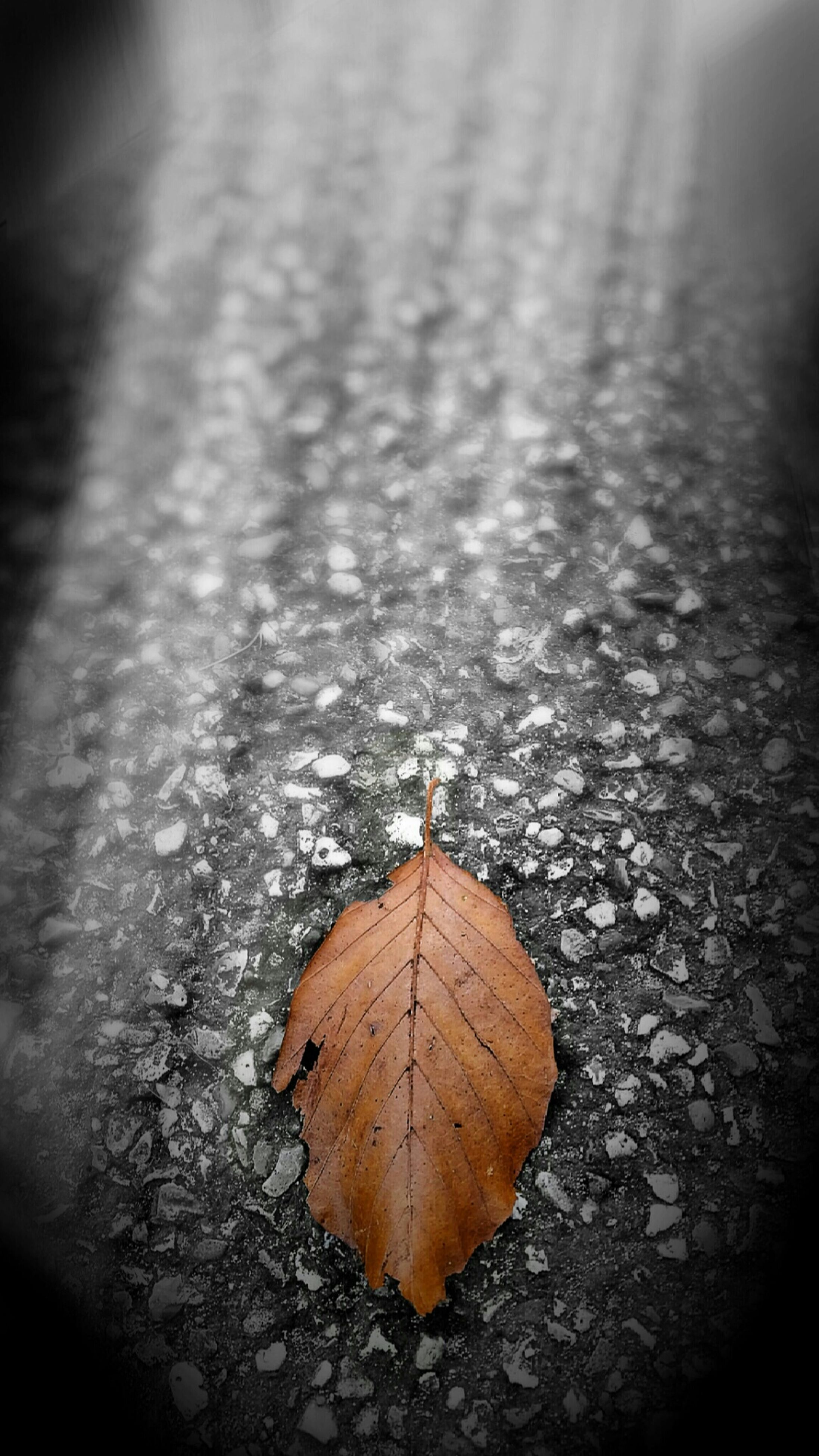 leaf, autumn, dry, close-up, textured, fallen, natural pattern, street, change, leaf vein, nature, season, asphalt, maple leaf, selective focus, road, outdoors, leaves, no people, ground