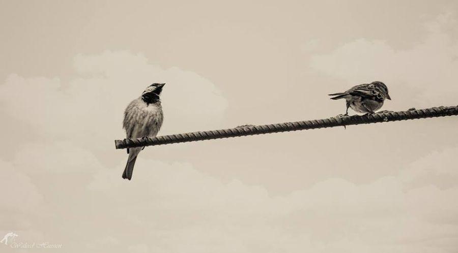 People Photography تصويري  الطبيعة Birds