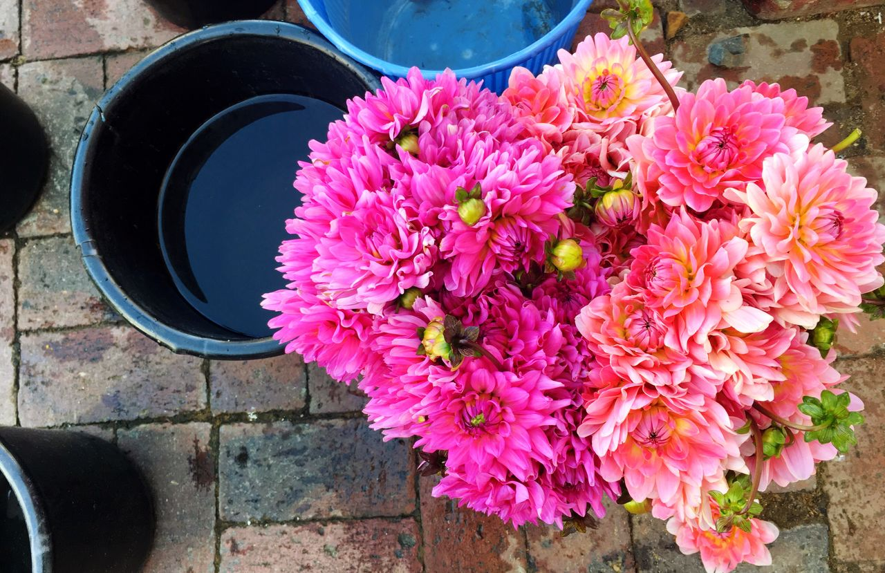 Cape Town streets Flower Dahlias Pink Color Petal Freshness Outdoors Fragility Close-up Nature Buckets Street Streetphotography Seller Capetown South Africa Water Pink Pink Flower