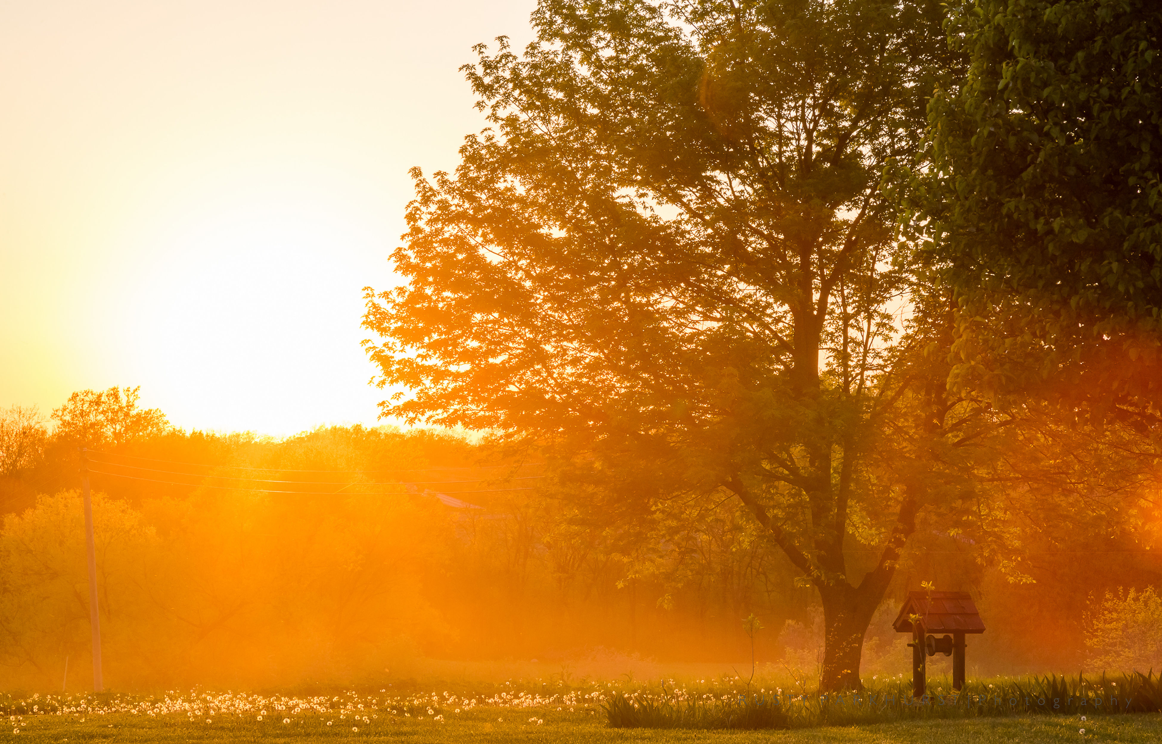 tree, sun, sunset, growth, beauty in nature, tranquility, orange color, sunlight, nature, tranquil scene, scenics, sunbeam, autumn, lens flare, yellow, landscape, field, change, season, idyllic, outdoors, sky, back lit, non-urban scene, tree trunk, no people, bright, growing, travel destinations, day, remote, park, tourism, sunny