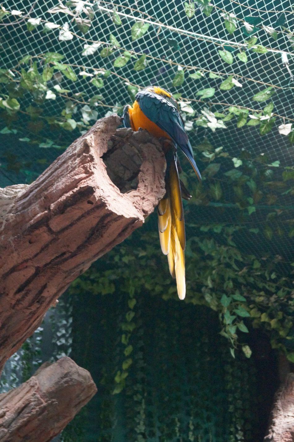 #Amarillo #animal #Azul #birds #Blue #captivity #guacamaya #macaw #naturecolors #park #Pets #yellow