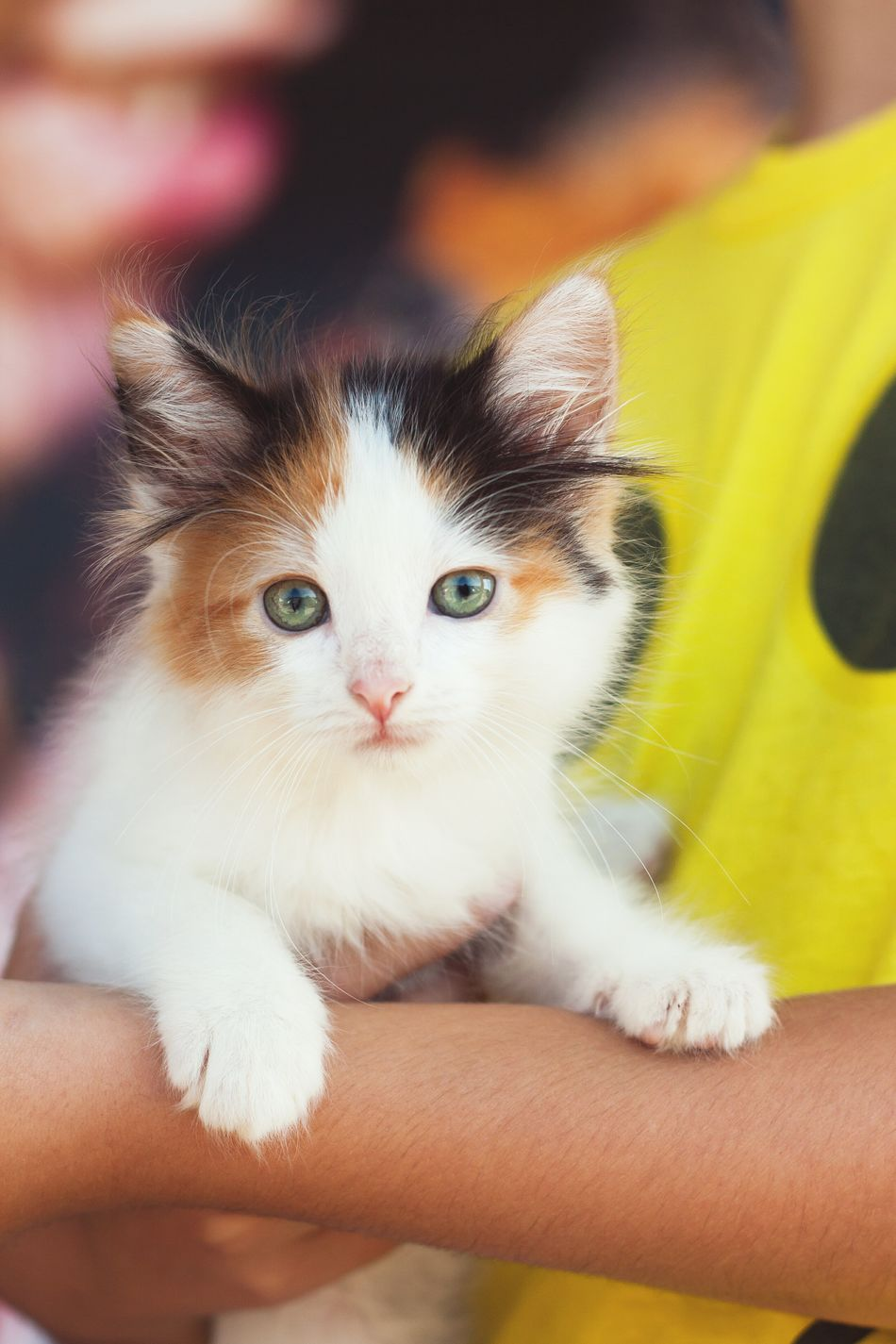 Rescue One not only has dogs for adoption but kittens as well.