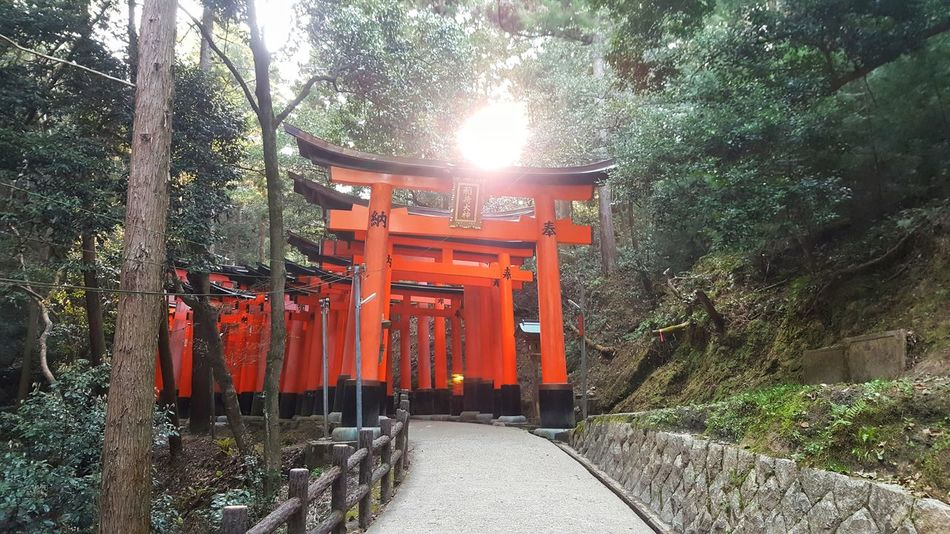 Outdoors Tree No People Sunlight Day Red Nature Sky Cultures Architectural Column Fushimi Ko Kyoto Fushimi Inari Kyoto Fushimi Inari Taisha Shrines & Temples Fushimi Inari Shrine Shrine Of Japan Temple Sacred Places Shrine Kyoto City Kyoto,japan Kyoto Japan Travel Destinations Travel The Way Forward