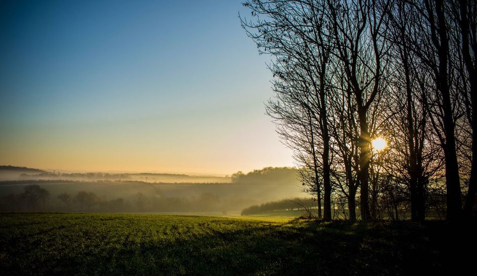 Foggy EyeEm Best Shots Nature Beauty In Nature Tree Scenics Nature_collection Tranquility Sunlight Landscape Rural Scene Field Sunset No People Growth Outdoors Sky Clear Sky Idyllic Day Forest Beauty In Nature Countryside Hazy  Tree