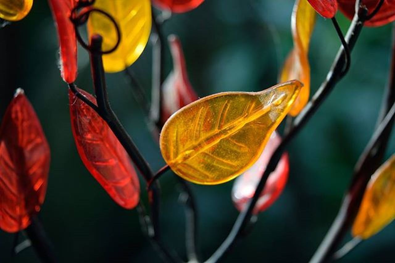 healthcare and medicine, leaf, no people, multi colored, plant, close-up, freshness, growth, flower, fragility, day, outdoors, nature