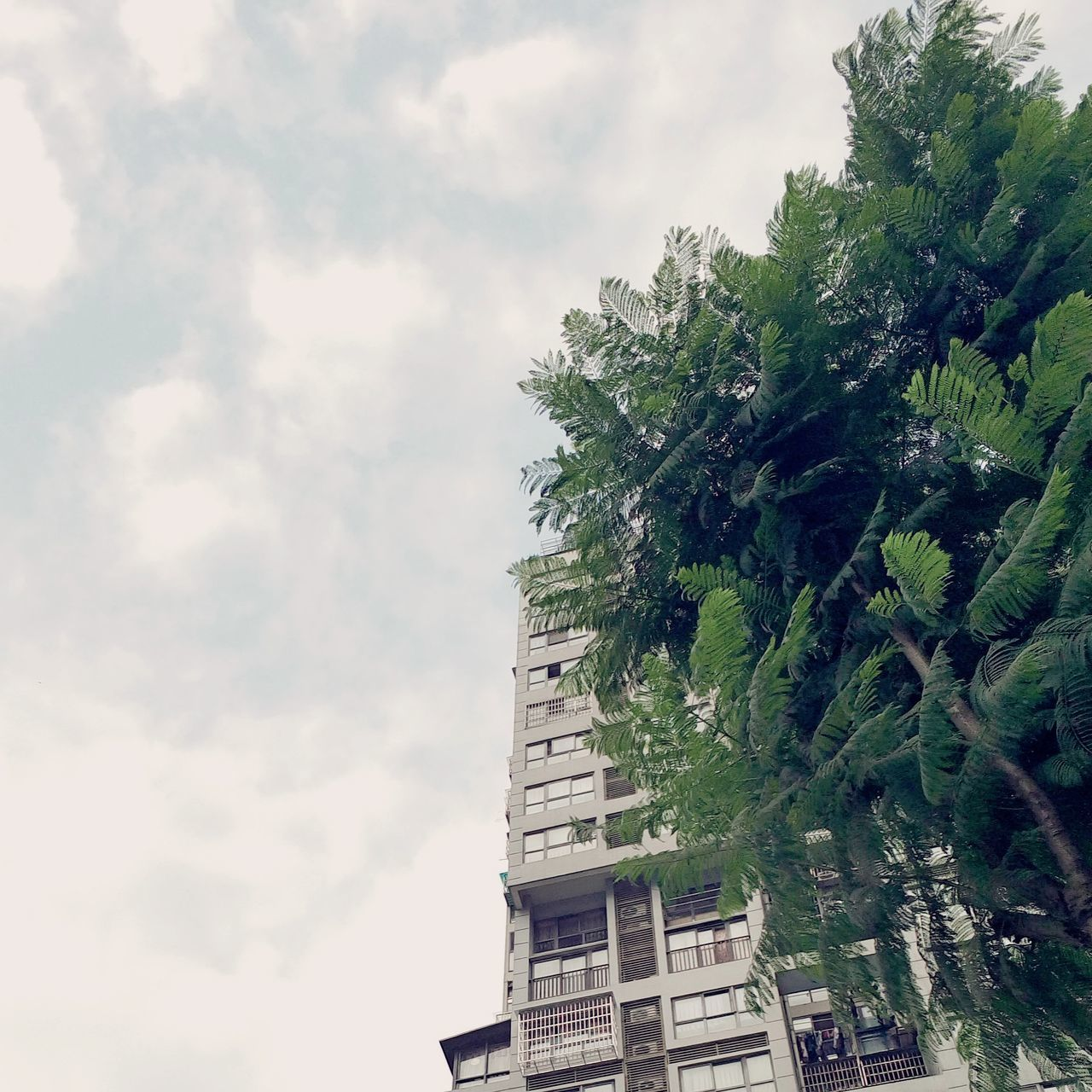 Sky Tree Cloud - Sky No People Nature Outdoors Green Leaves 中国 Nice Day White Wave Windy Day Day China