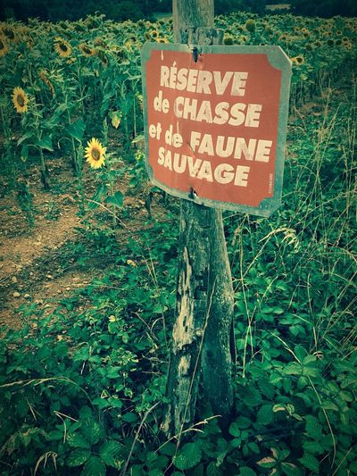 Reserve de chasse Sunflower Sign French