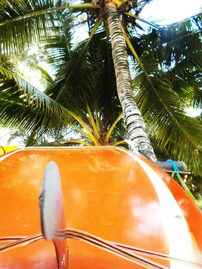 Palm Tree Tree No People Nature Outdoors Day Close-up Thailand Love Summer Phuket,Thailand Beach Surfboard Close Up Palm And Surf Amazing Thailand