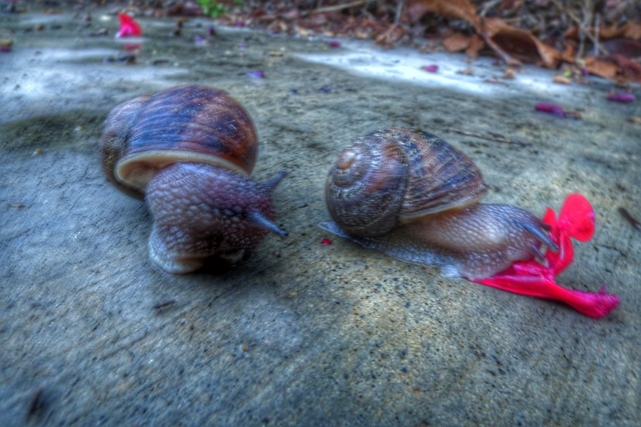Animal Themes High Angle View Close-up Outdoors No People Animals In The Wild Snail🐌 Snails🐌 Snails Having Fun Snail Shells Snailsinshells Snail On The Road
