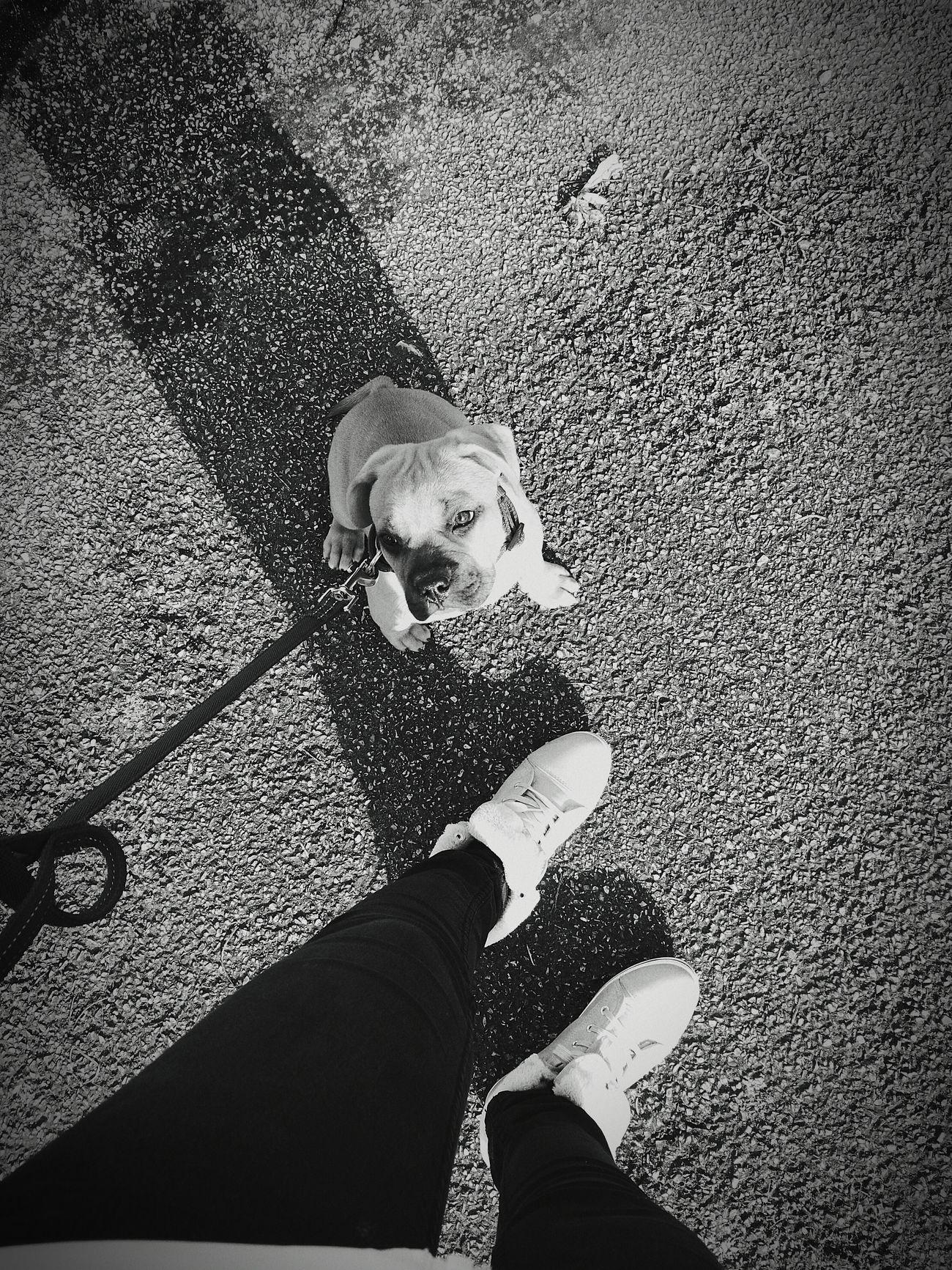 Human Leg Outdoors Babydog