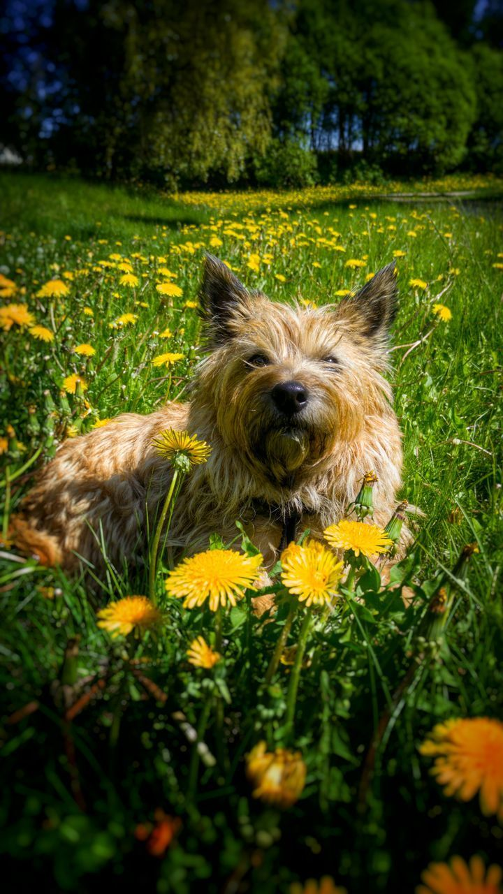 dog, one animal, animal themes, pets, domestic animals, flower, grass, mammal, nature, green color, no people, outdoors, portrait, day, beauty in nature