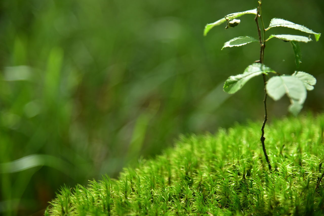 growth, nature, plant, green color, beauty in nature, outdoors, grass, day, no people, focus on foreground, close-up, fragility, freshness
