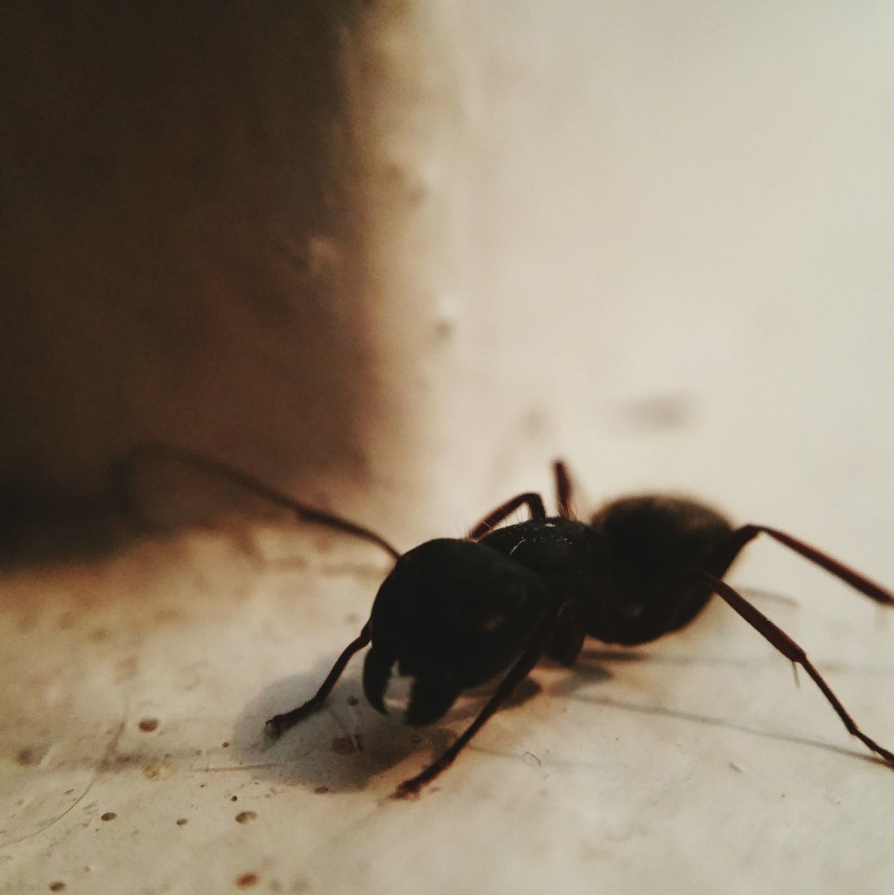 insect, animal themes, animals in the wild, close-up, one animal, indoors, no people, day
