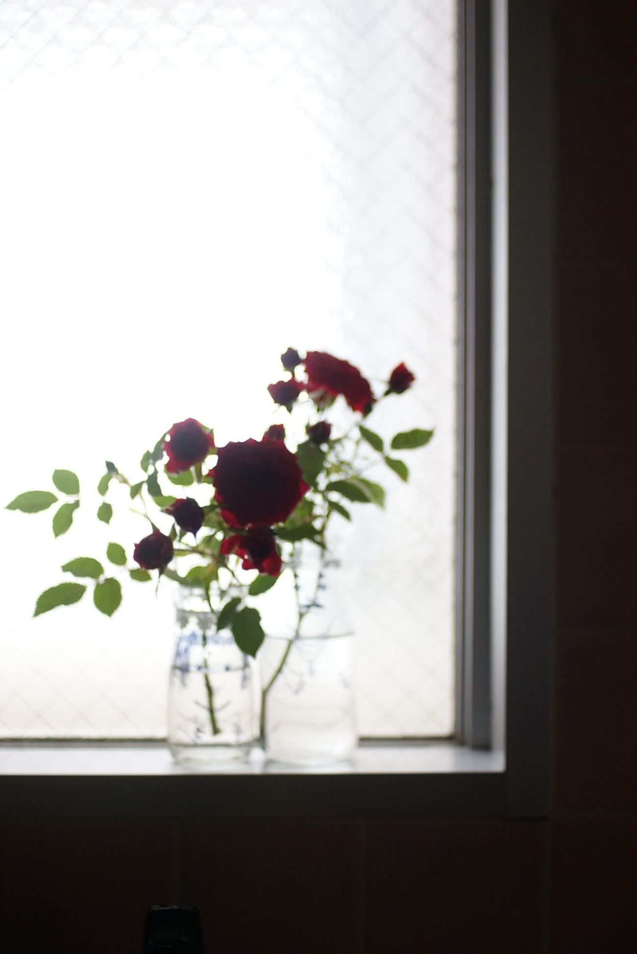 Flower Window Indoors  Day Nature Spring Beauty In Nature オールドレンズ Nofilter Oldlens 光と影