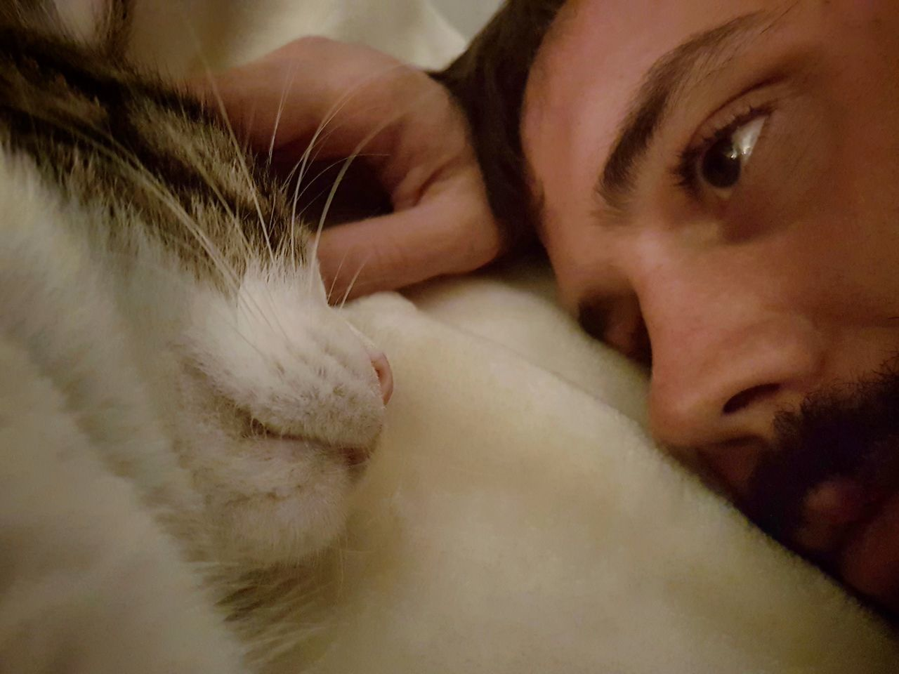 Domestic Cat Young Man Cat Affection Bed Resting