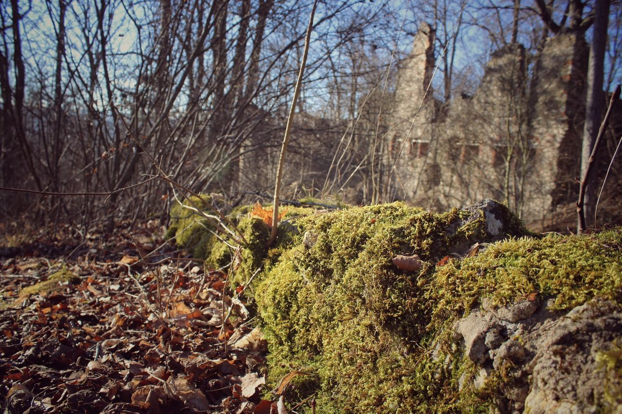 Abondoned Autumn Autumn Colors Autumn Leaves Beauty In Nature Castle Forest Forestwalk Hiking Hiking Trail Into The Woods Leaf Light And Shadow Moss Nature Nature Nature Photography Nature_collection Red Ruine Tree Trees Wall Wood