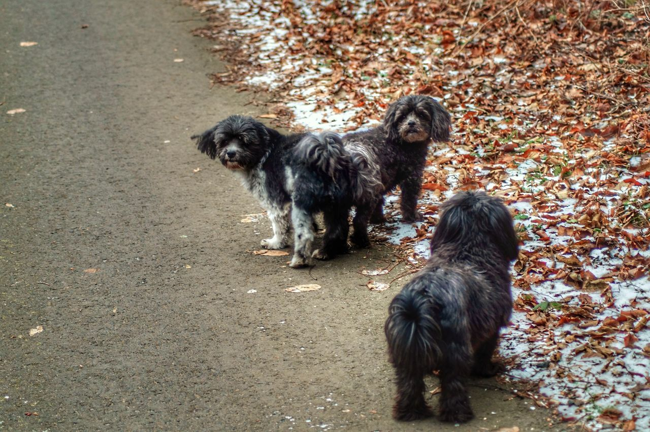 Dwarf Poodles Mother, Son And Daughter Animal Themes Domestic Animals Mammal Black Color Livestock Young Animal Animal Family Dog No People Outdoors Pets Day Togetherness Nature