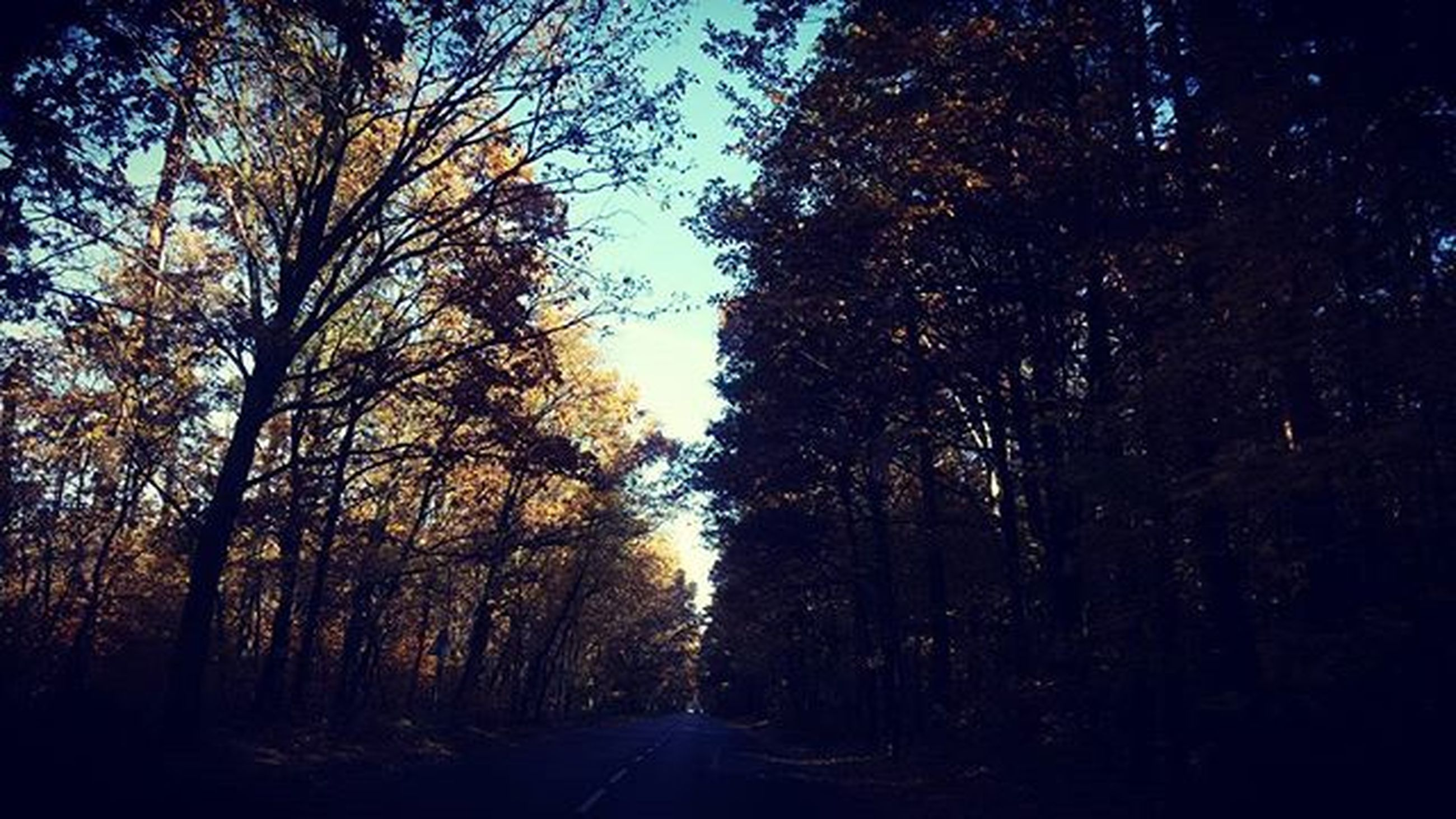 the way forward, tree, road, transportation, diminishing perspective, vanishing point, tranquility, street, nature, country road, empty road, treelined, tranquil scene, sky, growth, beauty in nature, forest, outdoors, scenics, branch