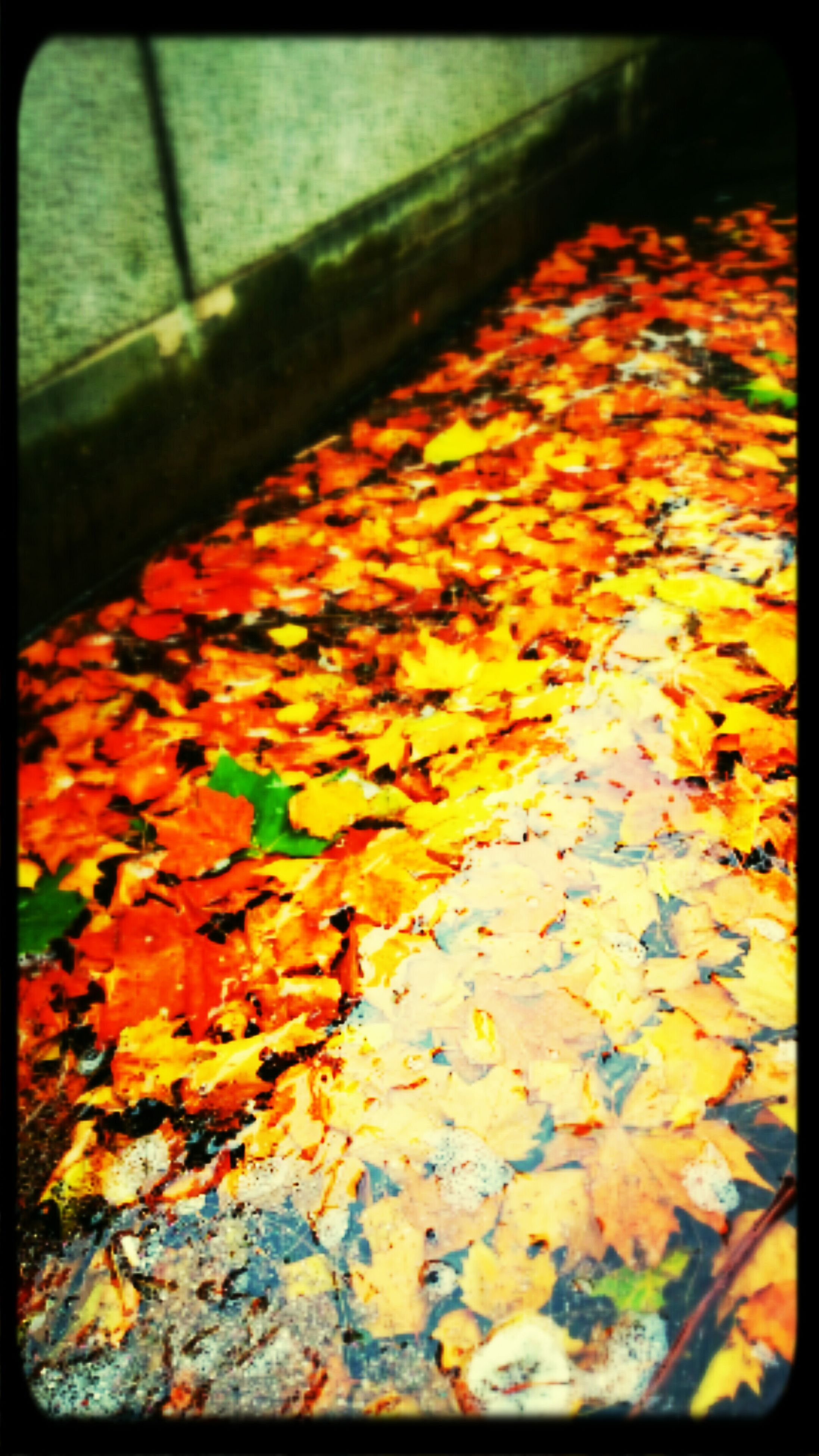 transfer print, auto post production filter, autumn, leaf, change, orange color, season, leaves, close-up, fallen, high angle view, no people, multi colored, day, dry, outdoors, selective focus, nature, abundance, sunlight