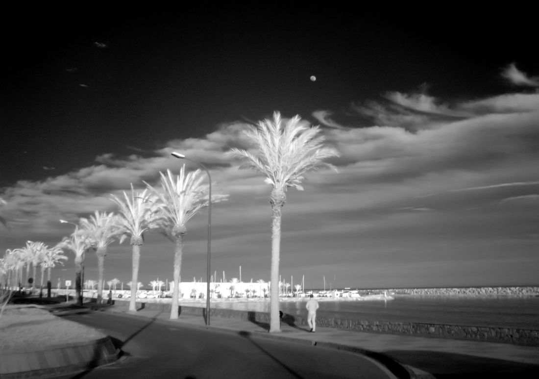 Beach Beauty In Nature Hotel Infrared Photography L'Hospitalet De L'Infant-Tarragona Mediterranean Sea Nature Outdoors Palm Trees Scenics Sea Shore Sky Water