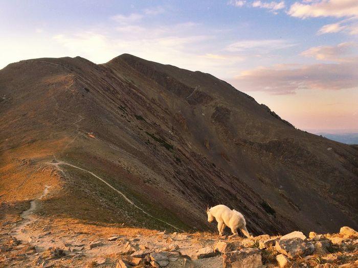 Nature Montana Sacajawea Mountains Mountain Range Mountain Goats Sunset Hiking