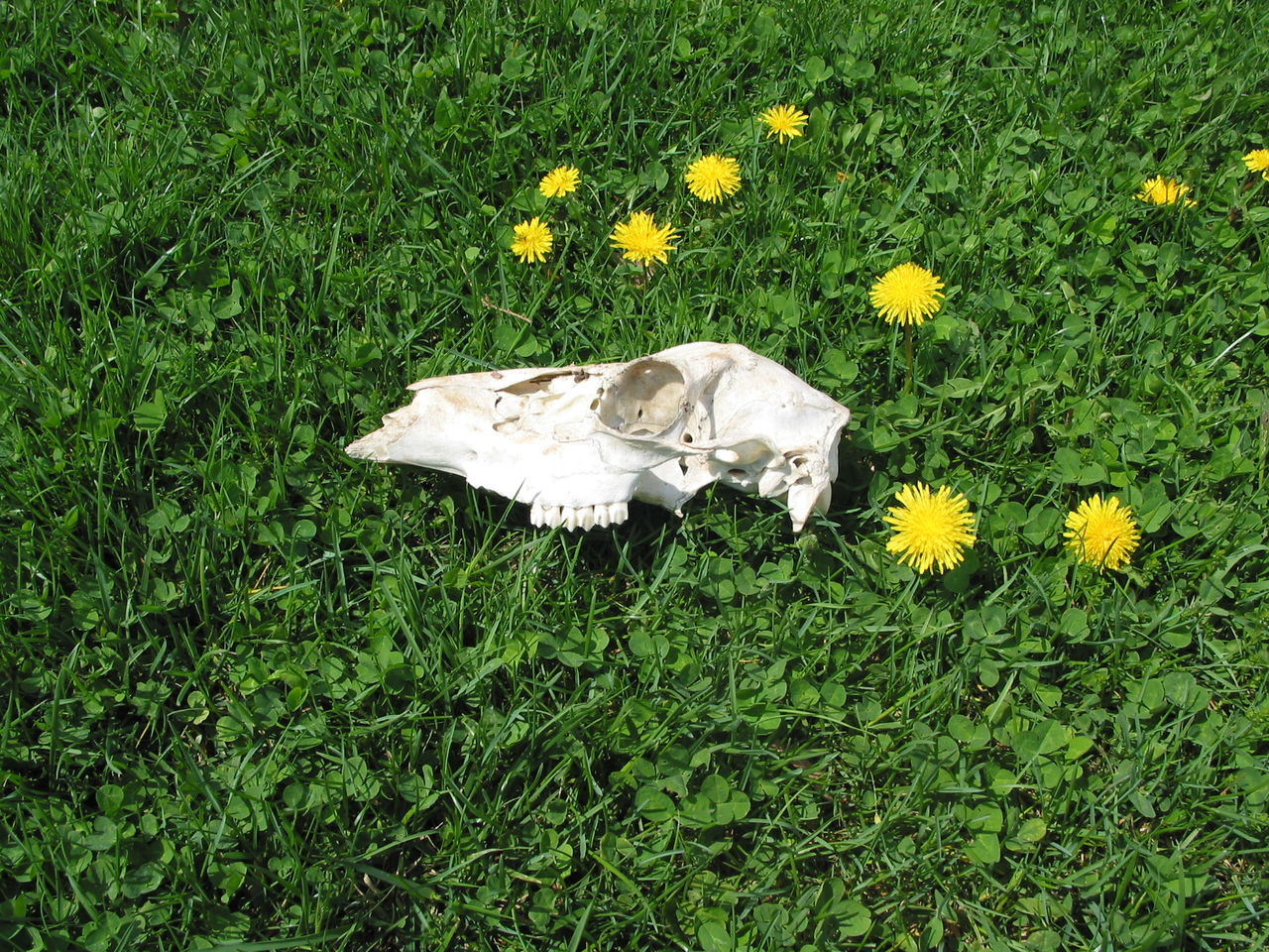 Beautiful stock photos of totenkopf,  Beauty In Nature,  Day,  Dead Animal,  Death