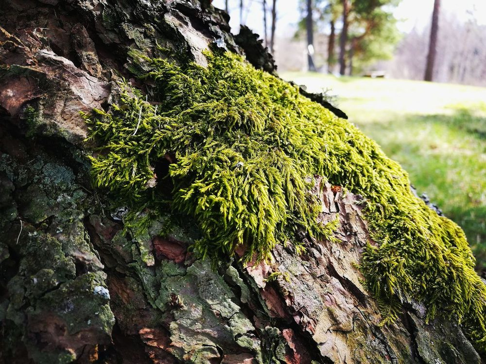 Nature Tree Green Color Beauty In Nature My Park🌲🏞🏡🌾👍 Mossy Tree Moss On Trees Moss Close Up Moss The Great Outdoors - 2017 EyeEm Awards