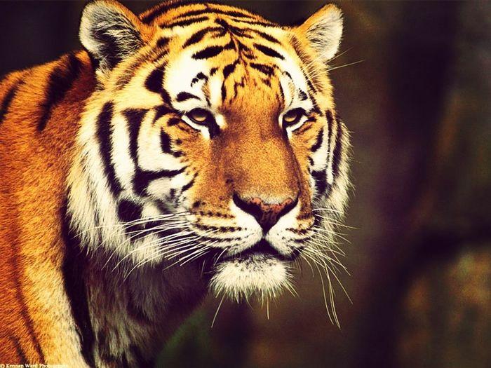 มีนิยายเล่มนึง ที่ทำให้ชั้นคลั่งเสืออย่างหนัก จิตแพทย์อยู่ไหน ด่วนๆ