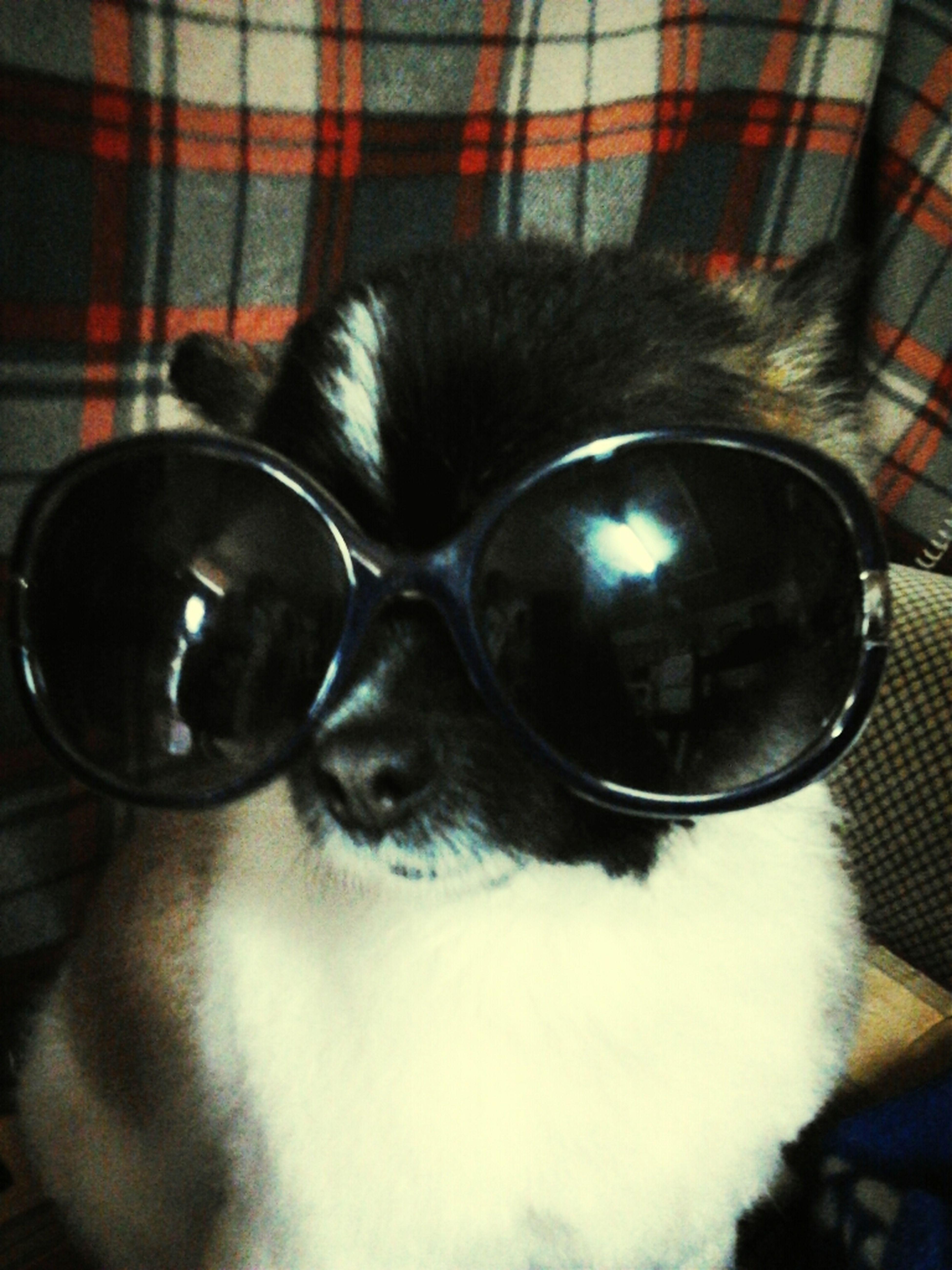 My Dog Rock's