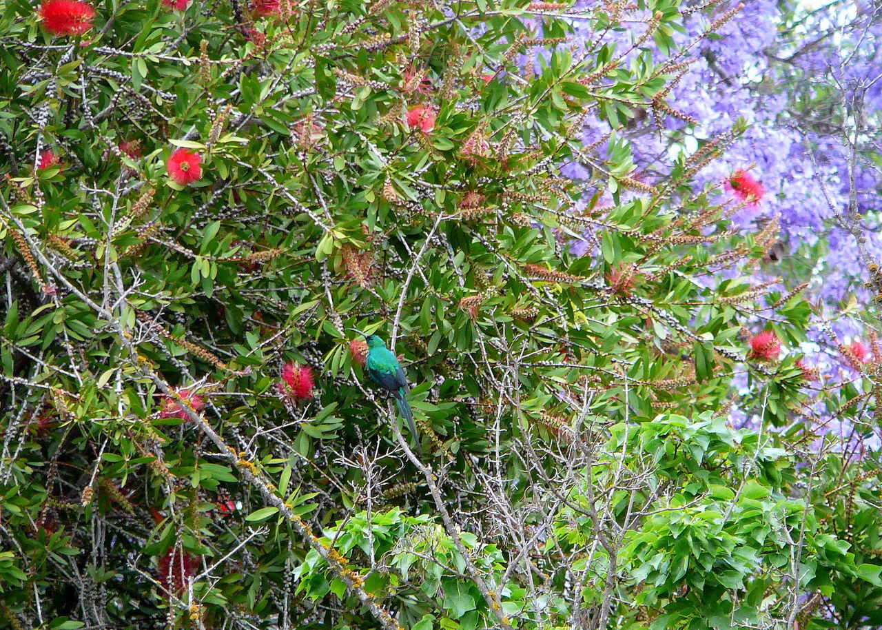 growth, nature, green color, red, outdoors, day, beauty in nature, no people, plant, animal themes, flower, grass, tree, close-up, freshness, bird