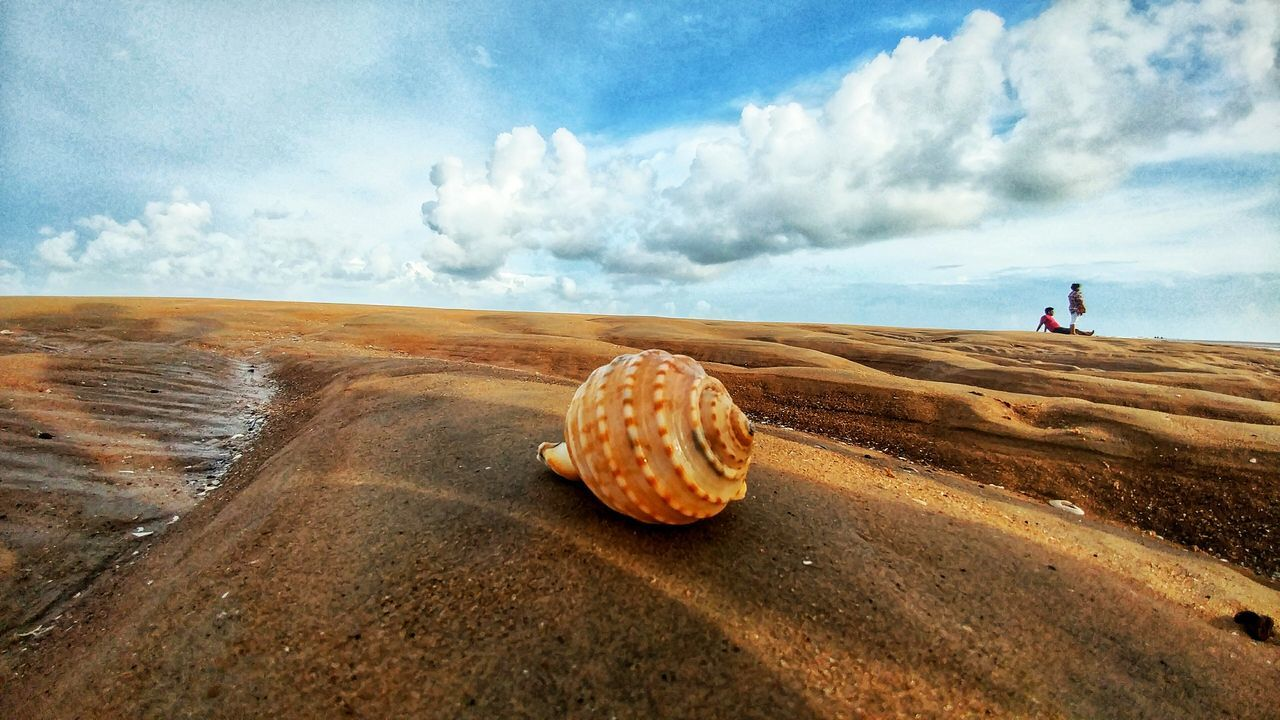 Sand Beach Cloud - Sky Landscape Beauty In Nature Nature Outdoors Day Sea Typeofshell Shell Photography Shell On Beach Shell On Sand Digha Bay Of Bengal Seashell❤ Close-up
