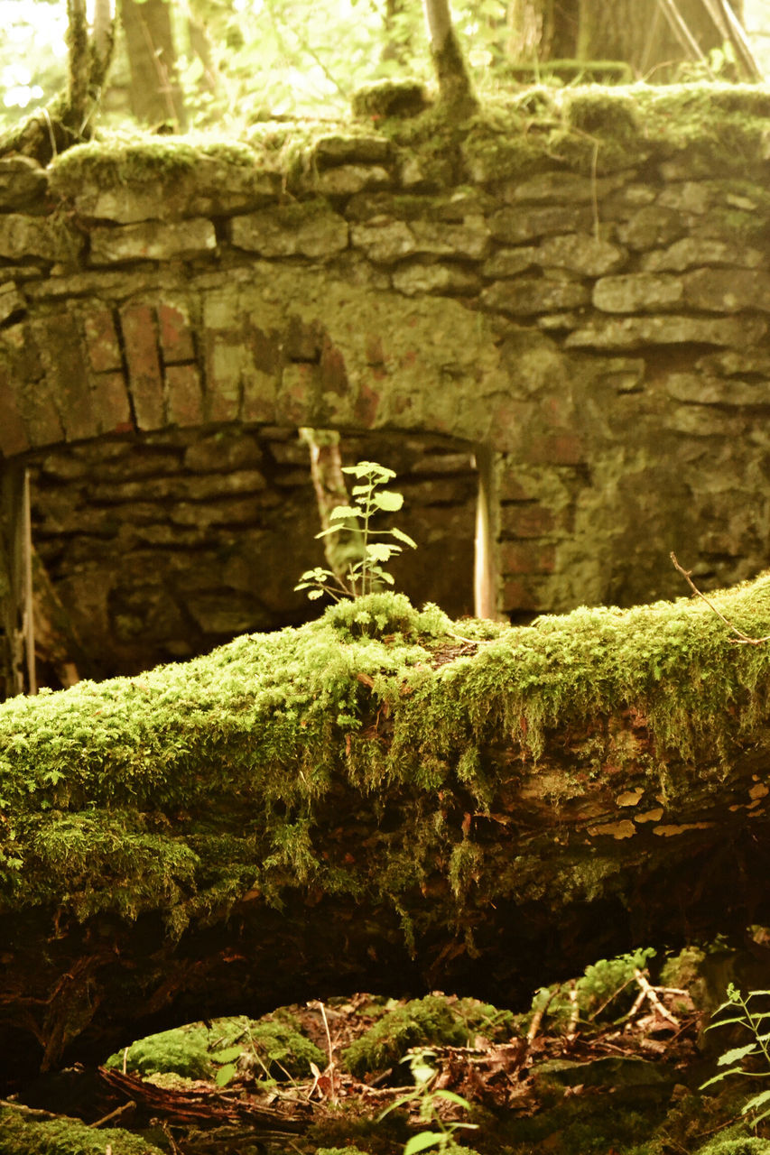 no people, day, moss, outdoors, green color, nature, growth, close-up, water, beauty in nature