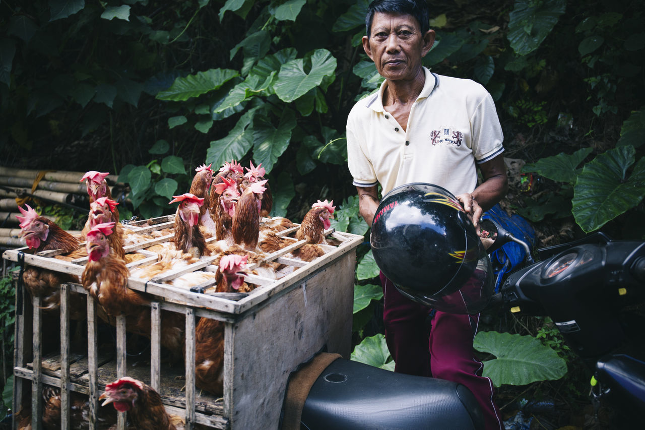 Ubud, Bali Adult Bali Cage Chickens Exotic Exoticism Freshness Funny Helmet Hilarious Hindu Holiday INDONESIA Market Motorcycles Occupation Scooter Small Business Travel Travel Destinations Travel Photography Traveling Travelphotography Ubud Vacation