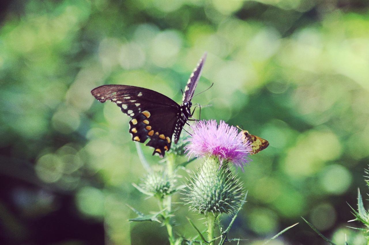 butterfly - insect, nature, one animal, insect, animal themes, animals in the wild, growth, fragility, no people, flower, focus on foreground, butterfly, day, plant, outdoors, freshness, close-up, beauty in nature, animal markings, animal wildlife, pollination, flower head, perching