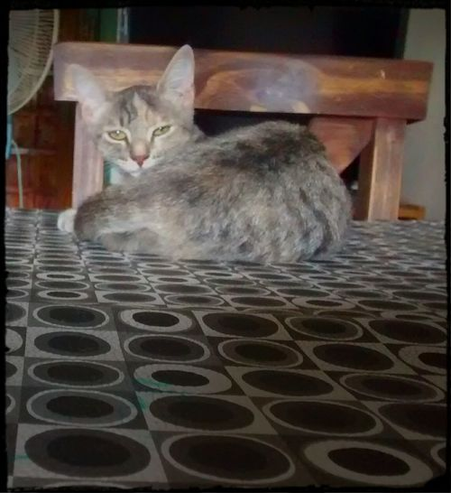 Domestic Cat Pets Domestic Animals One Animal Animal Themes Feline Gato Vago