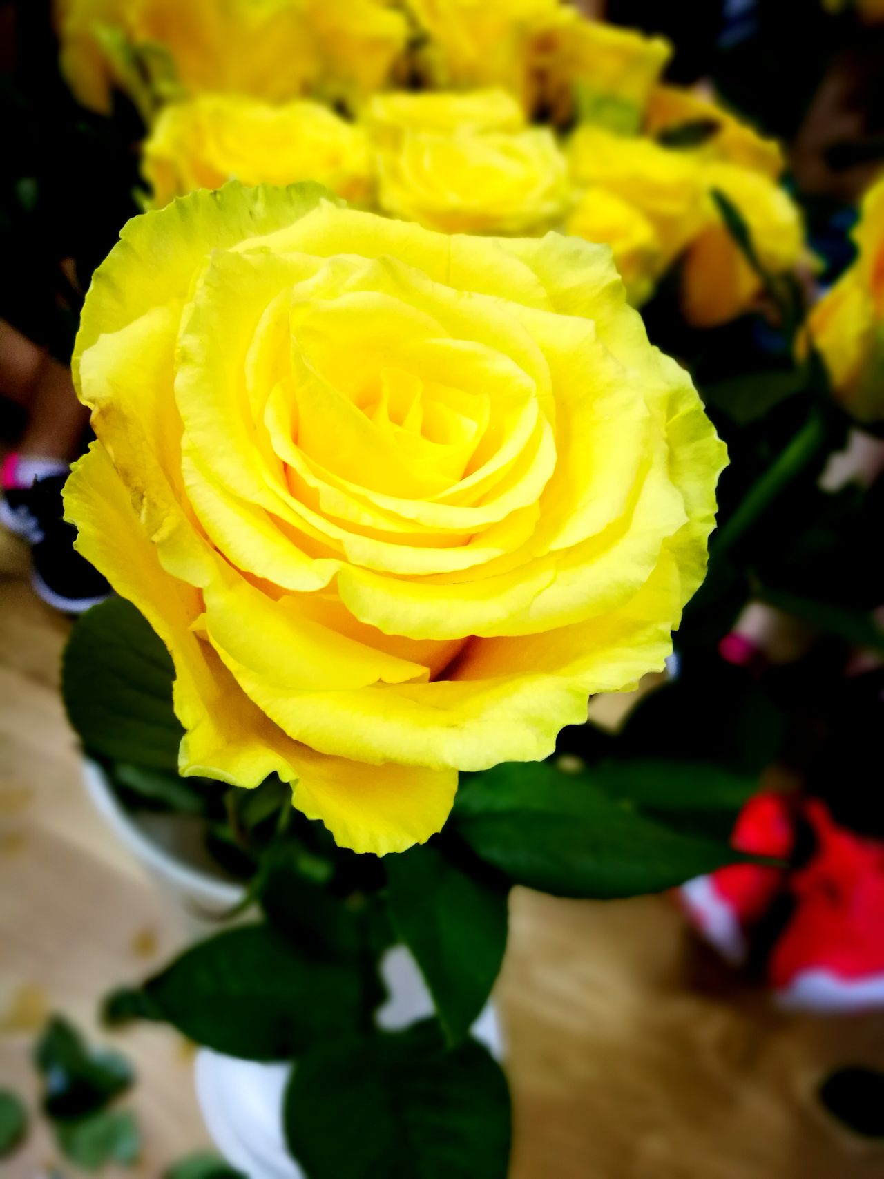 Flower Yellow Flower Head Petal Freshness Blossom Beauty In Nature Fragility Rose - Flower Nature Springtime In Bloom Vibrant Color Green Color Close-up Backgrounds Plant No People Indoors  Day Yellow Roses Yellow Rose Yellow Flowers Yellow Flower Roses🌹