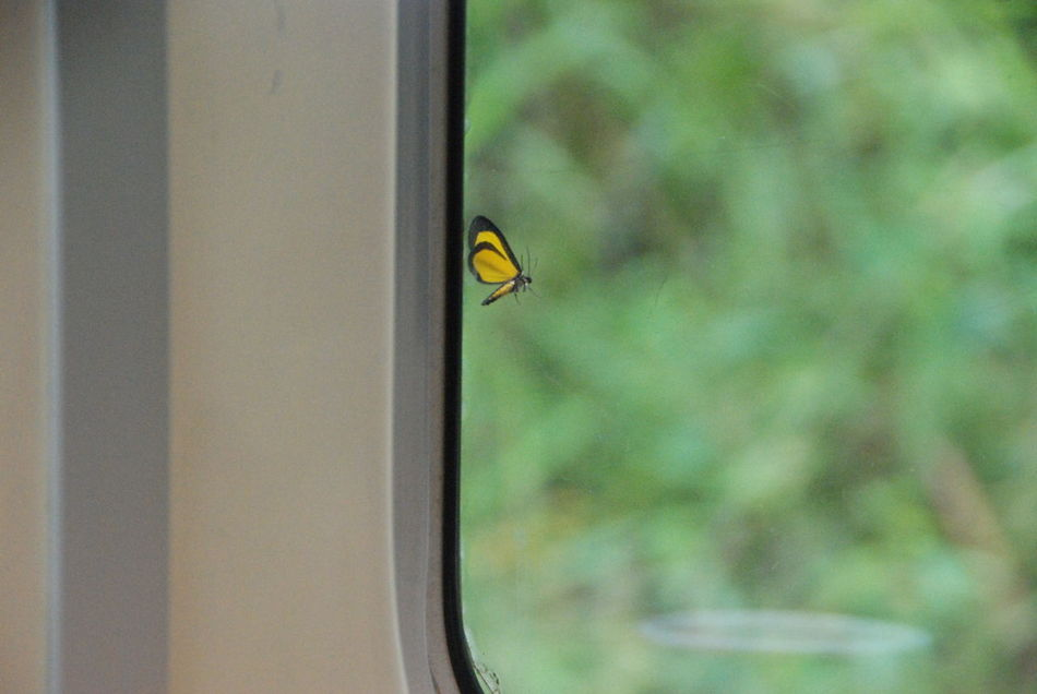 Beautiful stock photos of window, Animals In The Wild, Butterfly, Close-Up, Day