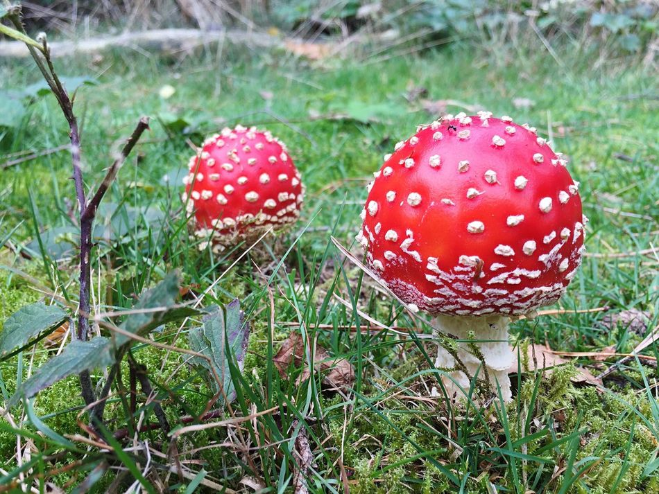 🍄 Check This Out Taking Photos Mushrooms Mushroom_pictures Mushrooms 🍄🍄 First Eyeem Photo Nature Naturephotography