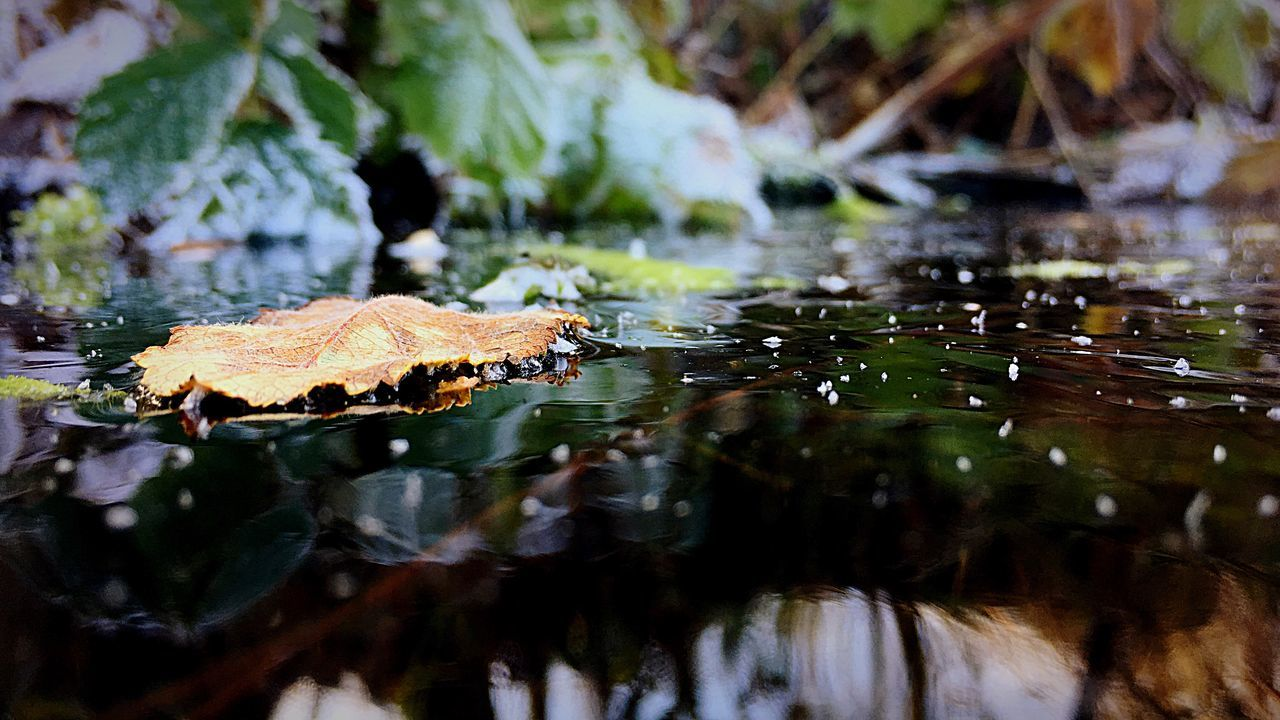 Water Reflections Frozen Leaf Wintertime Nature Ice Beatiful Nature Frosty Cold Temperature Leafs Winter Wonderland Nature_collection Frosty Leaves Leaf 🍂 Nature Photography Natur Beauty In Nature Nature On Your Doorstep Naturelovers Natural Beauty Naturephotography Nature_perfection Natural Nature's Diversities Naturelover